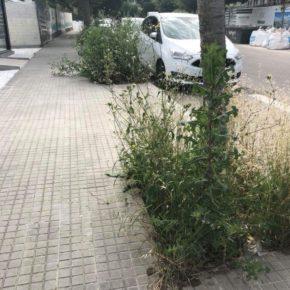 Cs Sant Cugat pide intensificar el mantenimiento de los alcorques para reducir el riesgo de incendios y garantizar la seguridad vial