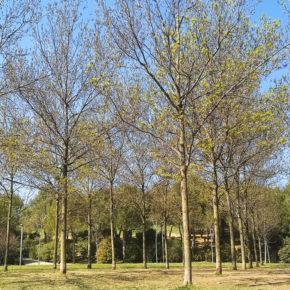 """Moción de Cs Sant Cugat para la puesta en marcha del proyecto """"Apadrina un parque"""""""